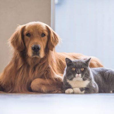 corona effects pets